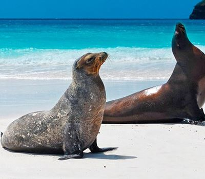 5 Days Galapagos Island Hopping Tour